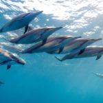 Freediving with Dolphins Off Hawaii on World Oceans Day