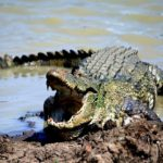 Surfer Killed By Croc In Sri Lanka